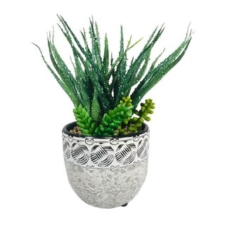 """Link to Succulent Aloe Pot 9.5"""" Similar Items in Decorative Accessories"""
