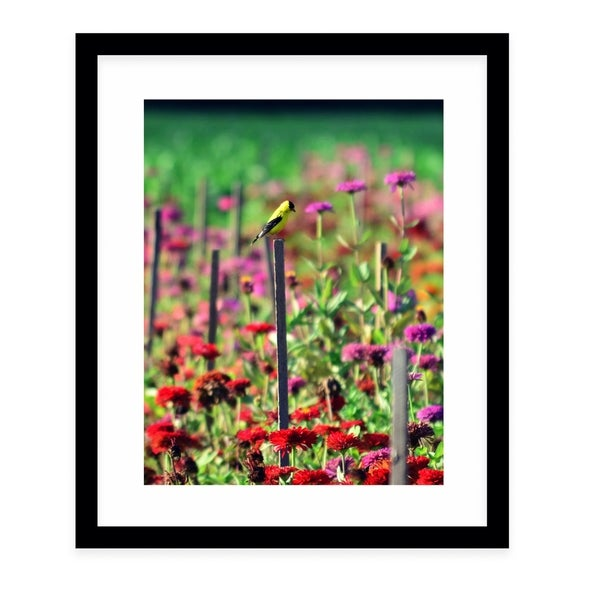 LIVE IN THE SUNSHINE Black Framed Giclee Print By Robin Delean