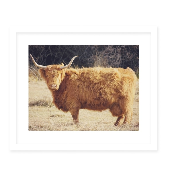HIGHLAND White Framed Giclee Print By Robin Delean