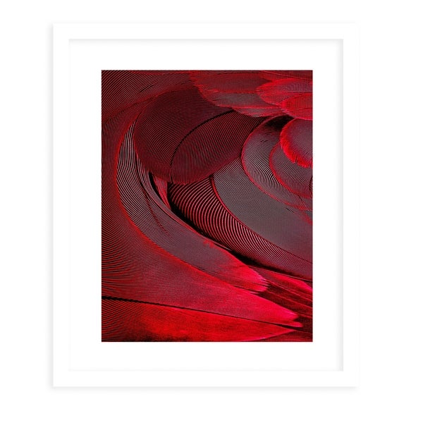 FEATHER RED White Framed Giclee Print By Diane Pattie