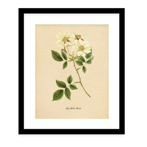 BOTANICAL VINTAGE ELEVEN Black Framed Giclee Print by Kavka Designs