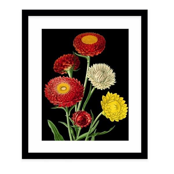Shop Flower Twenty Two Black Black Framed Giclee Print By Kavka Designs Overstock 30725044