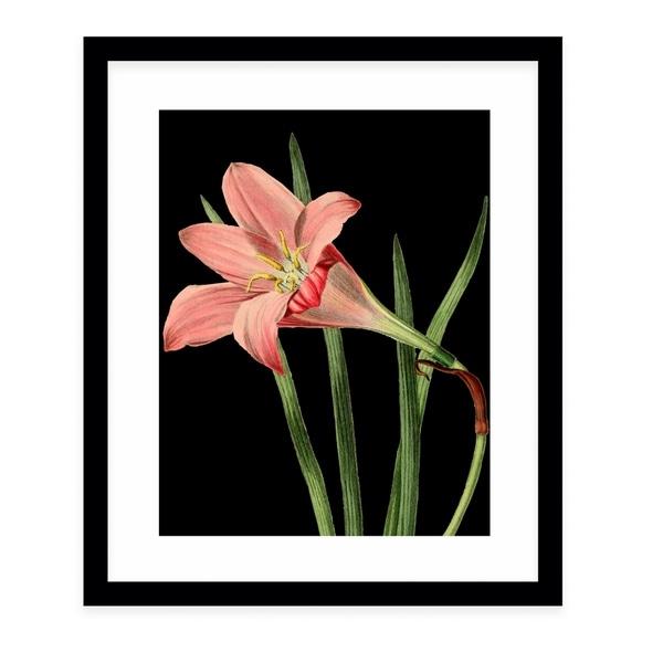 FLOWER TWENTY FOUR BLACK Black Framed Giclee Print By Terri Ellis
