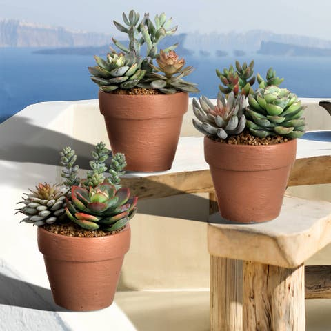 """Frosted Succulent in Clay Pot 5.5"""" 3 Piece Set"""