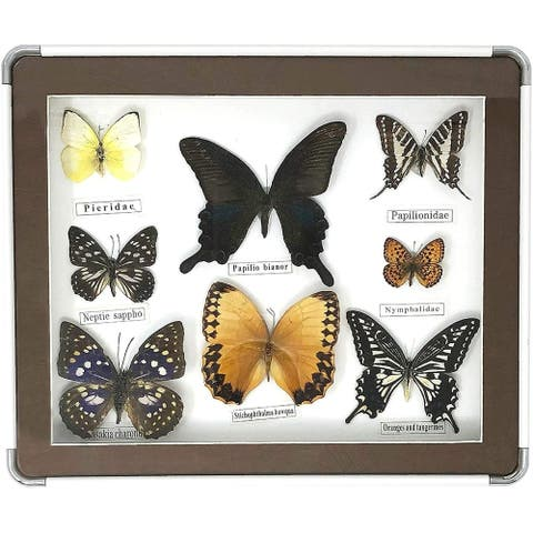 Framed Collectors Butterfly Selection Home Decor - 8 Real & Unique Species with Names Underneath