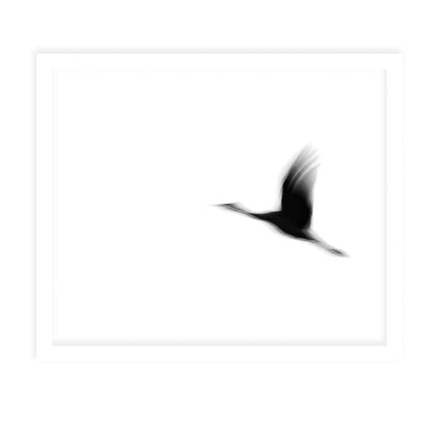 CRANE White Framed Giclee Print By Tal Paz Fridman