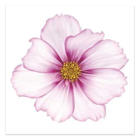 """""""Pink Hibiscus"""" Unframed Free Floating Tempered Glass Wall Art"""