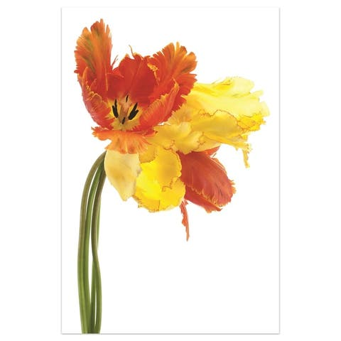 """Orange Yellow Parrot Tulip"" Wall Art on Free Floating Tempered Glass"