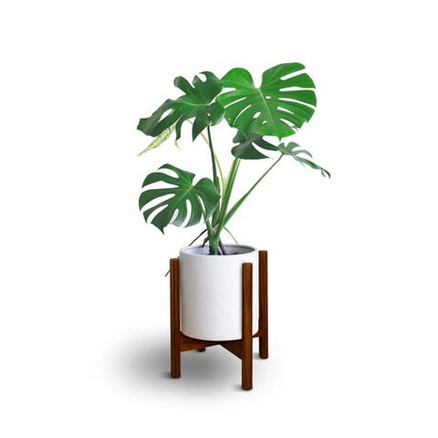 """Mid-Century Modern Wood Plant Display Stand, Fit Up to 12"""", Plant and Pot NOT Included - 12""""W x 16""""H"""