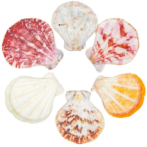 120x Scallop Beach Natural Seashells for DIY Crafts Crafting Wedding Baby Shower - Red