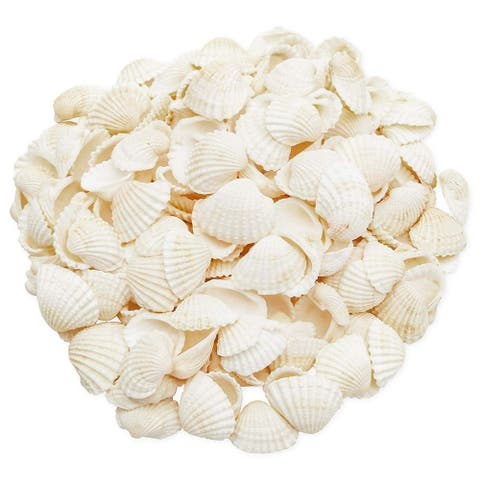 200x Clam Seashells Beach Sea Shells for DIY Crafts Home Wedding Décor White