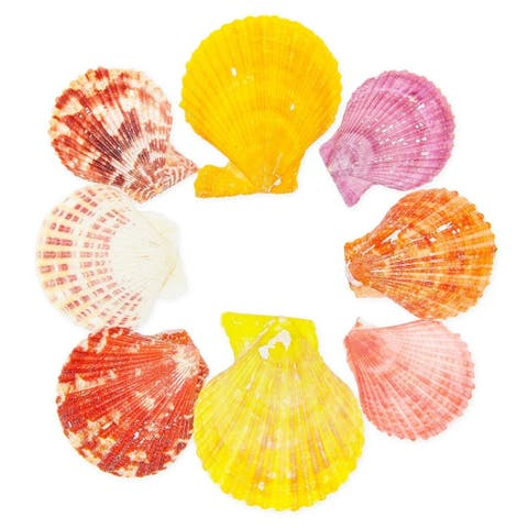 100x Scallop Beach Seashells for DIY Crafts Crafting Wedding Baby Bridal Shower - Orange