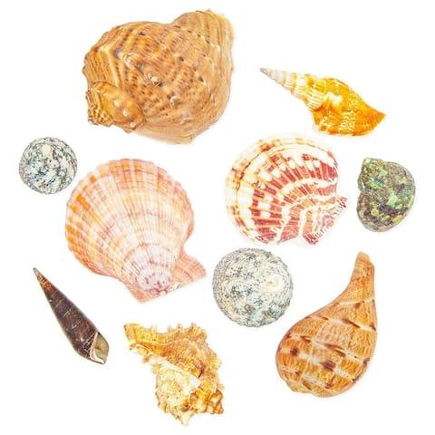 20x Nautical Beach Seashells Sea Shells for DIY Crafts Home Wedding Decoration - Orange