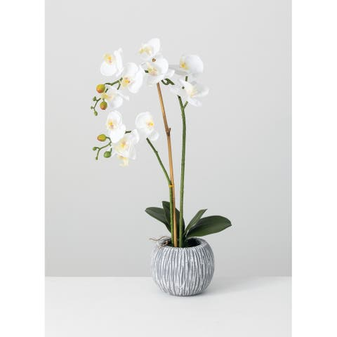 Potted Orchid - White