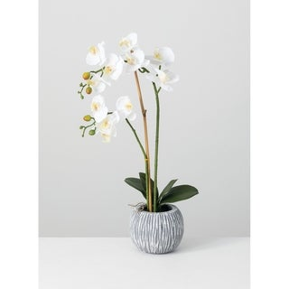 Link to Potted Orchid - White Similar Items in Decorative Accessories