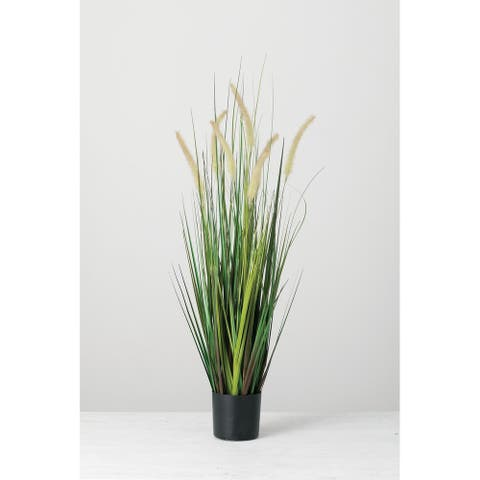 Potted Dogtail Grass - Green