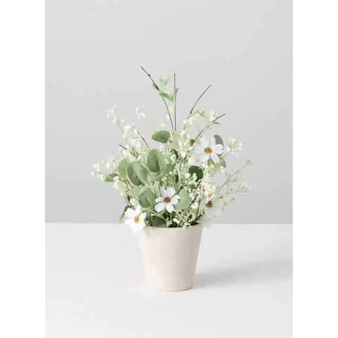 Daisy Eucalyptus Potted - Green