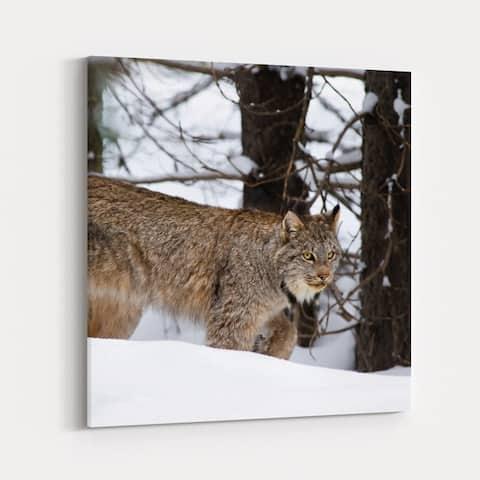 Banff Alberta Animals Big Cat Canada Canvas Wall Art Print