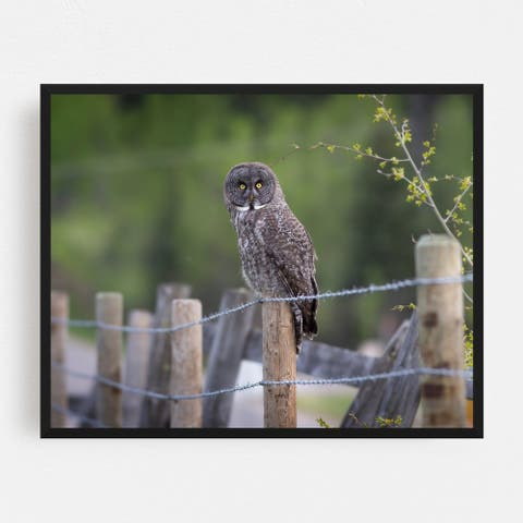 Calgary Alberta Animals Backroad Bird Framed Wall Art Print