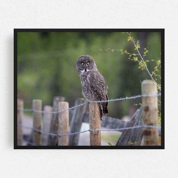 Calgary Alberta Animals Backroad Bird Framed Wall Art Print. Opens flyout.