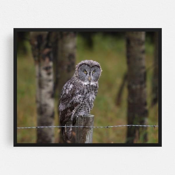Calgary Alberta Angry Animals Bird Framed Wall Art Print. Opens flyout.