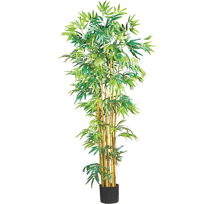 Bambusa Tree