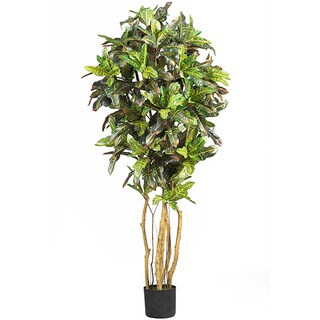 Silk Croton 5-foot Tree