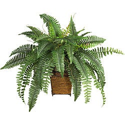 The Curated Nomad Zaius Silk Boston Fern with Wood Wicker Basket