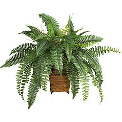 Silk Boston Fern with Wood Wicker Basket