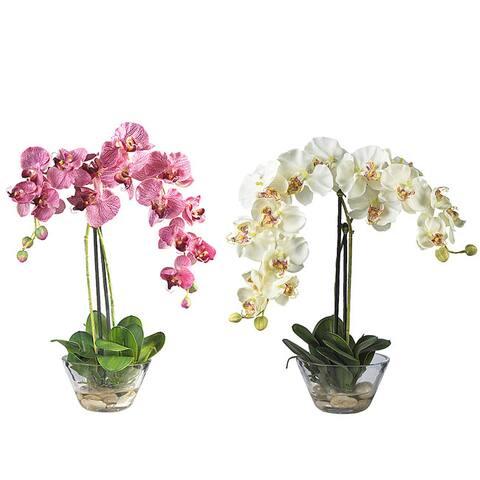 Phalaenopsis Silk Flower Arrangement with Glass Vase