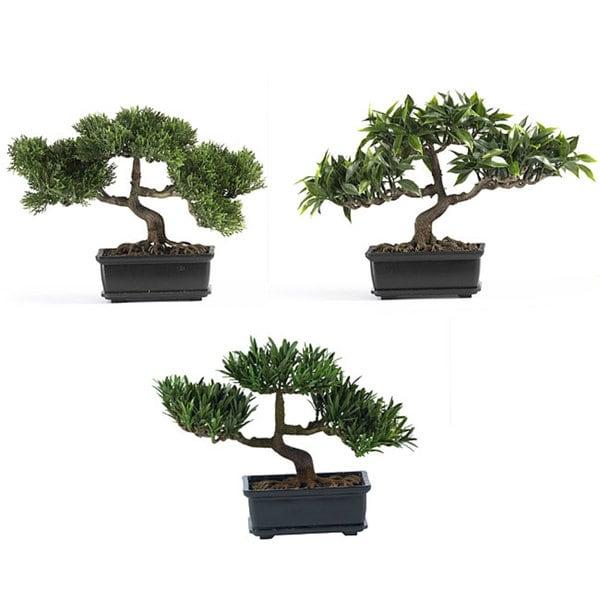 Decorative Bonsai Plant Collection (Set of 3)