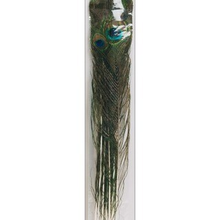 Peacock Eye Natural Feathers (Pack of 12)