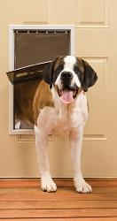 PetSafe White Extra Large Freedom Door