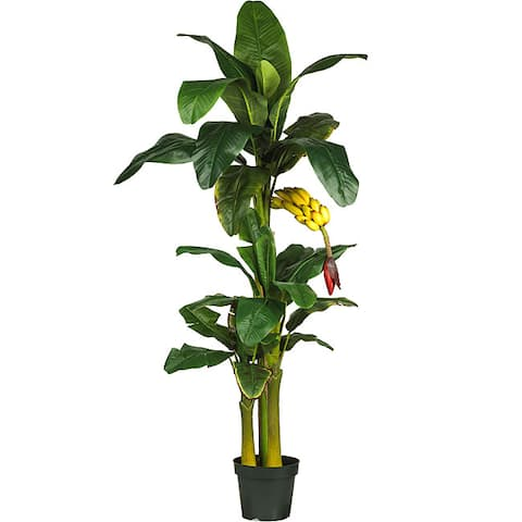 Triple Stalk Banana Tree - Green
