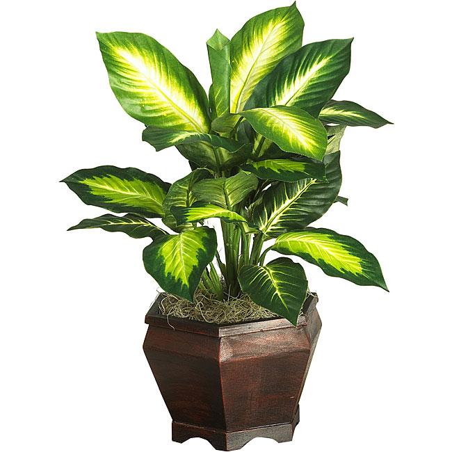 Silk Golden Dieffenbachia Plant With Wood Vase Free