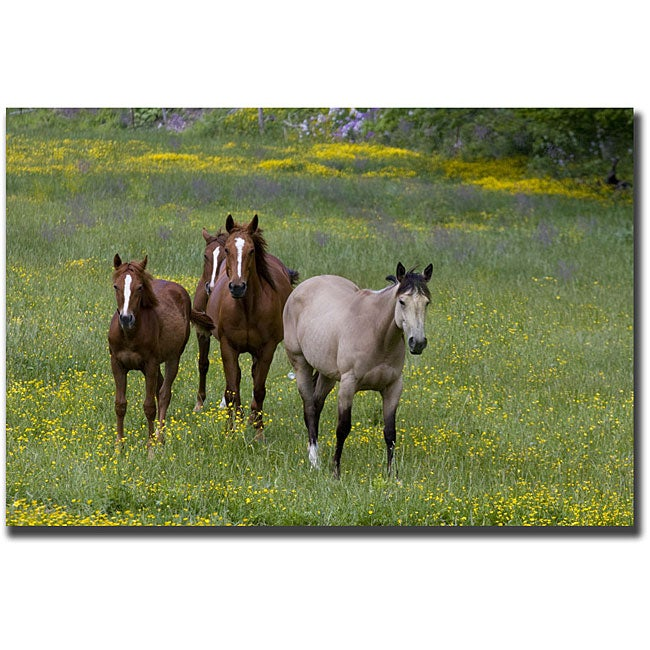 Cary Hahn 'Horses in a Field' Gallery-wrapped Art