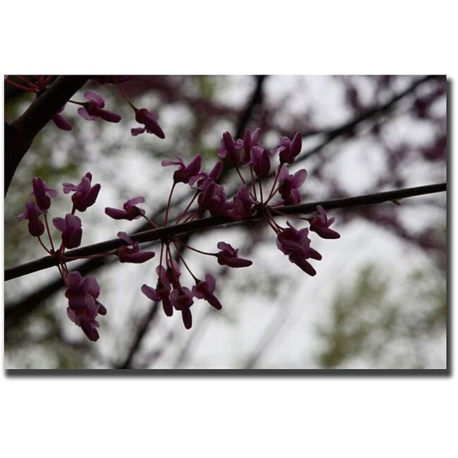 Cary Hahn 'Purple Bloom' Canvas Art
