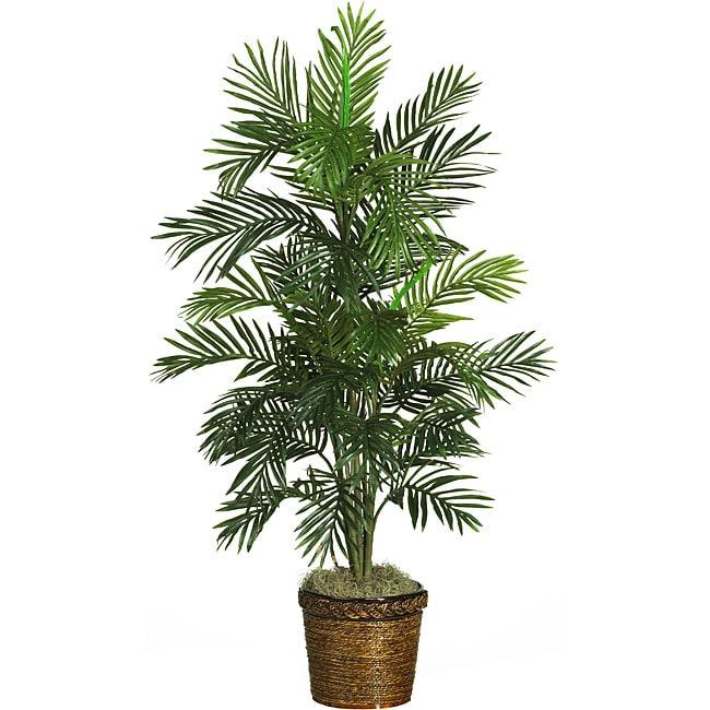Silk areca palm tree free shipping today 11899882 - Real areca palm ...