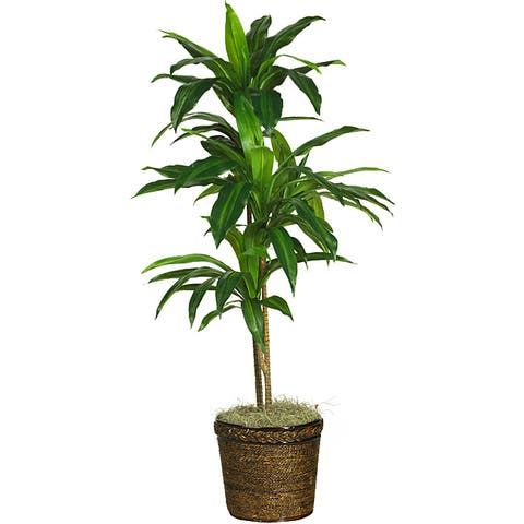 Silk 48-inch Real Touch Dracaena Plant