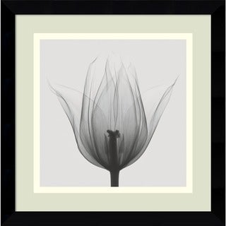 Framed Art Print 'Triumph Tulip' by Steven N. Meyers 12 x 12-inch