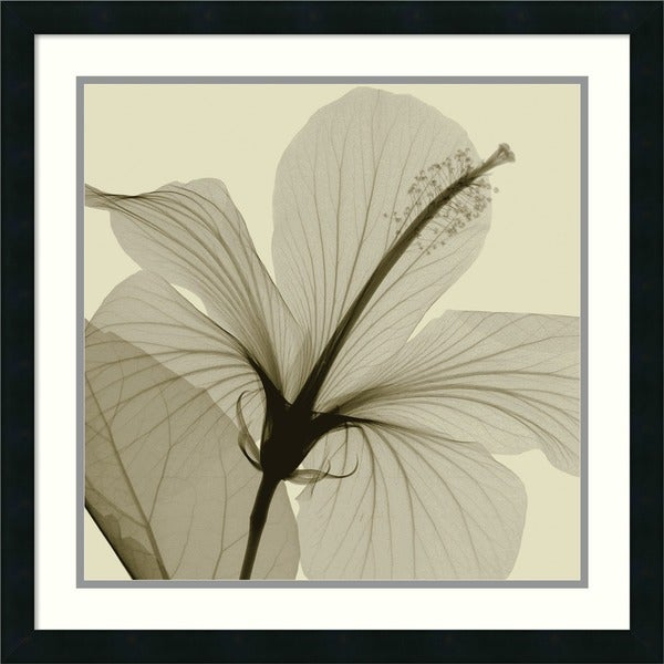 Shop Framed Art Print \'Hibiscus\' by Steven N. Meyers 24 x 24-inch ...