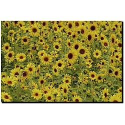 Kurt Shaffer 'A Sunflower Day' Gallery-wrapped Art