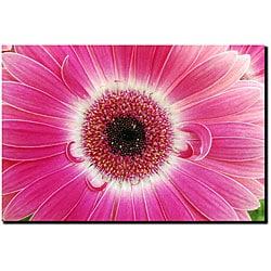 Kurt Shaffer 'Pink Gerber' Gallery-wrapped Art