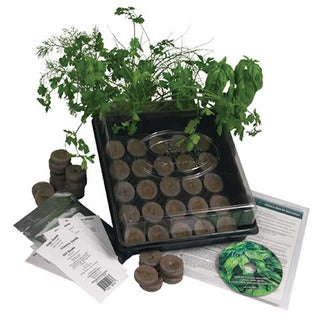 Indoor Culinary Herb Garden Starter Kit