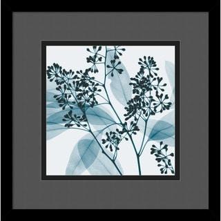Framed Art Print 'Eucalyptus II' by Steven N. Meyers 14 x 14-inch