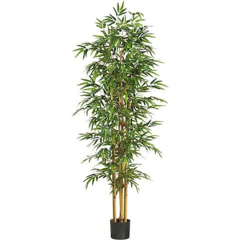 Bamboo Silk Tree