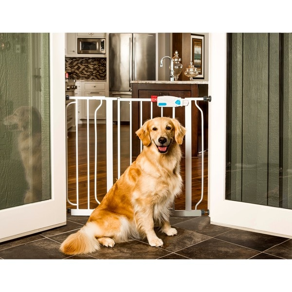 Carlson Steel Extra Wide Pet Gate Free Shipping Today