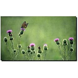 Kurt Shaffer 'Monarch Thistles' Gallery-wrapped Canvas Art