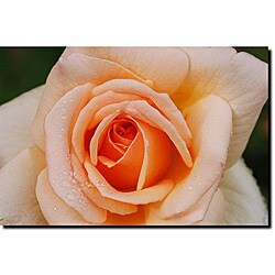Kurt Shaffer 'Early Morning Rose' Gallery-wrapped Canvas Art