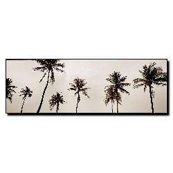 Preston 'Black & White Palms' Canvas Art